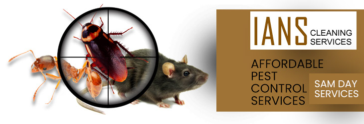 Affordable Pest Control Cooma