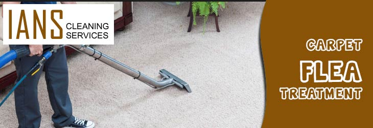 Carpet Flea Treatment Exeter