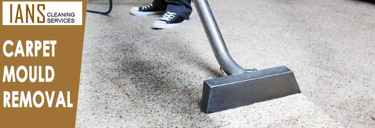 Carpet Mould Removal Holt