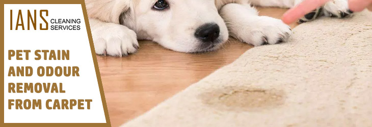 Pet Stain and Odour Removal From Carpet Moonee Ponds