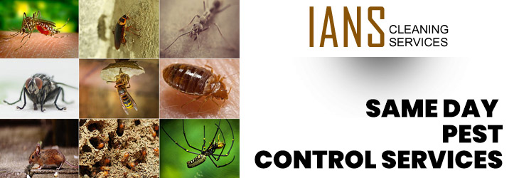Same Day Pest Control Adelaide
