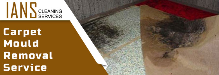 Carpet Mould Removal Launceston